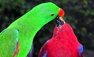 Птицы могут различать больше цветов, чем люди. Фото: РИА Новости
