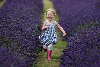 Девочка бежит по полю лаванды.Фото:Dan Kitwood/Getty Images