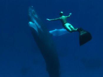 Сцена из документального фильма «Бухта». Фото: Submarine Films