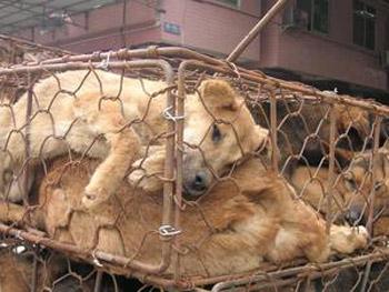 Мучают для получения прибыли. В Китае нет закона о защите животных. Фото: PETA/Karremann