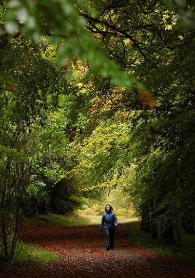 Золотая осень в Англии. Фото: Getty Images