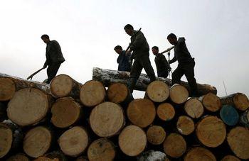 Амурской таможней выявлены факты контрабанды в Китай больших объемов леса. Фото: AFP