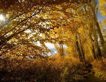 За сохранение ленинградских лесов подписались петербуржцы. Фото: David McNew/Getty Images