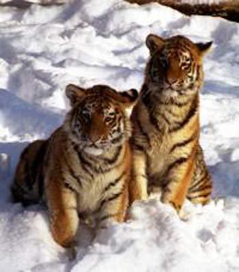 Фото: Виктор Животченко/WWF России