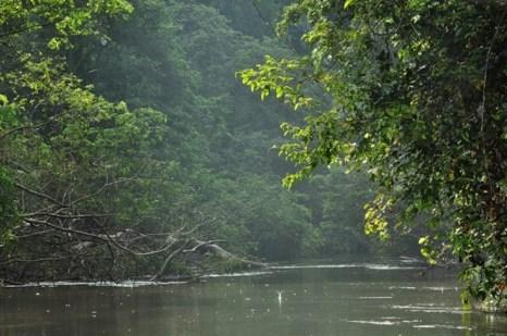 Сурама. Гайана. Фото: Елизавета Кирина/tecnolux.ya.ru