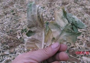 Ухудшение качества почвы в Китае может привести к продовольственному кризису. Фото с epochtimes.com