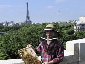 Улья на крыше «Гранд Пале» в Париже на фоне Эйфелевой башни. Фото: Stephane De