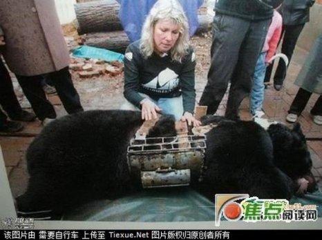 Основатель «Ассоциации защиты животных в Азии» Джилл Робинсон вместе со спасенным медведем. Но из-за тяжелой болезни вынуждены сделать ему эвтаназию. Фото: jiaodian.com