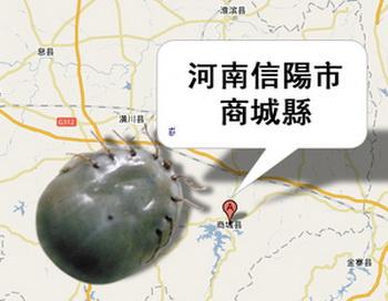 Укусы клещей в Китае становятся все более опасными. Фото: Великая Эпоха (The Epoch Times)