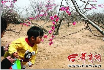 Праздник цветов персика. Сын спрашивает: «Почему цветы не пахнут?» «Потому что они искусственные» — отвечает мама. Провинция Шэньси. Фото с epochtimes.com