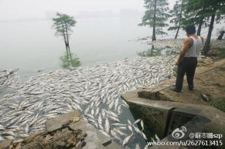 Мёртвая рыба в озере Наньху. Июль 2012 год. Фото с epochtimes.com