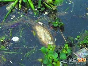 Вода в реке Хэцзян загрязнена токсичными металлами. Фото с news.163.com