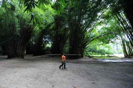 Фестиваль бамбука пройдет в Корее. Фото: ORLANDO SIERRA/AFP/Getty Images