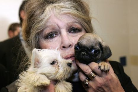 Две жизни Брижит Бардо. Брижит Бардо со спасенными щенками. Фото: VALERY HACHE/AFP/Getty Images