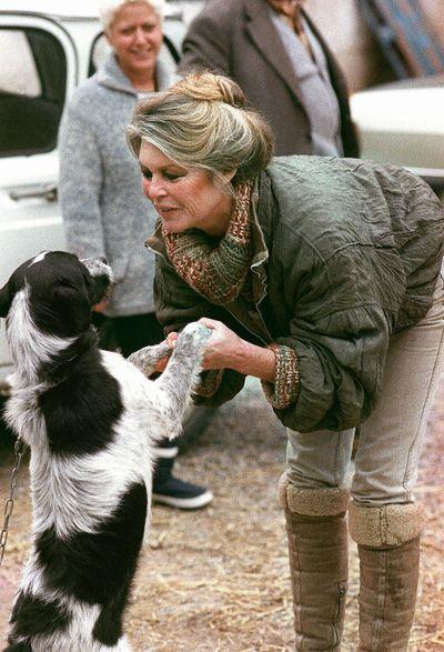 Две жизни Брижит Бардо. Брижит Бардо играет с собакой на юге Франции, в Марселе. Фото: GERARD FOUET/AFP/Getty Images