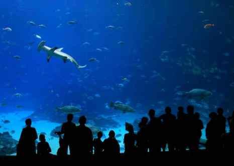 Одним из удивительных обитателей глубин является акула-молот. Фото: Streeter Lecka/Getty Images