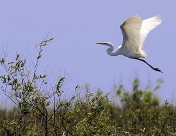 Взлетит птица — и внезапно ты вспомнишь меня. Фото: DANIEL GARCIA/AFP/Getty Images