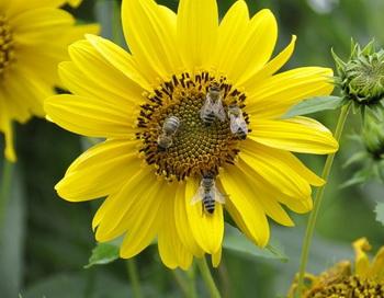 Пчелы. Фото: Екатерина Кравцова