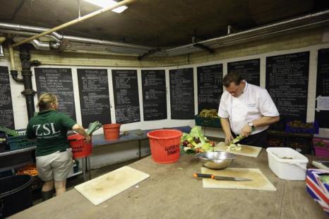 Шеф-повар лондонского зоопарка, специалист по здоровой пище для животных, готовит блюда в лондонском зоопарке 17 июля 2013 года. Фото: Oli Scarff/Getty Images