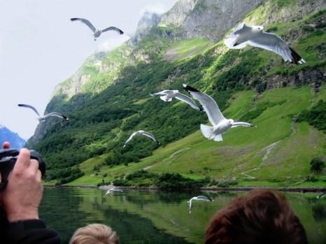 Северный пейзаж. Чайки над фьордом. Фото: Ирина Рудская/Великая Эпоха (The Epoch Times)