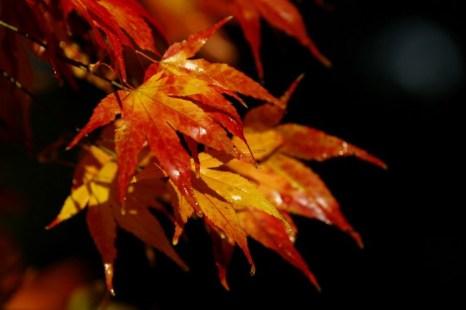 Осень дарит нам красочные листья и новые возможности работы в саду. Фото: Dan Istitene/Getty Image