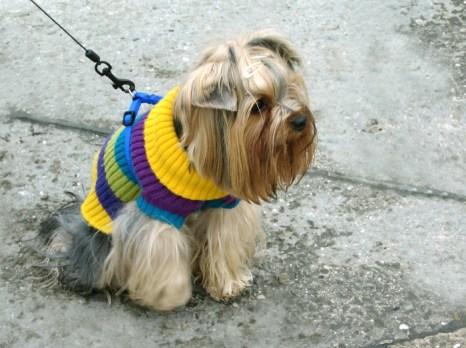 Чехия — страна, где очень любят собак. Фото: Ирина Рудская/Великая Эпоха (The Epoch Times)