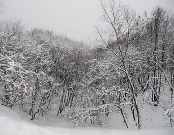 Зима. Фото: Николай Богатырёв