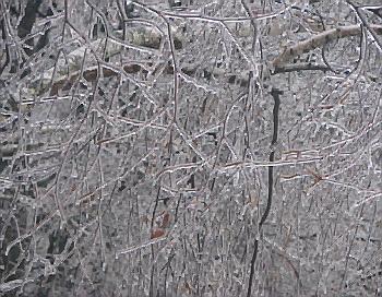 Ледяной дождь. Фото: Инга Вернер