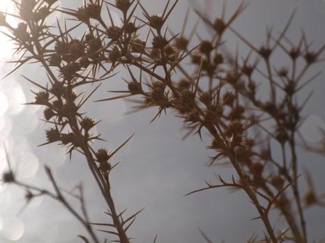 Недалеко от Псагота. Фото недельной давности. Фото: Хава Тор/Великая Эпоха (The Epoch Times)