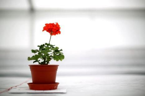 Старейшая и самая крупная в Великобритании независимая выставка цветов — фестиваль Southport Flower Show — стартовала 15 августа 2013 года в парке Виктория города Саутпорт. Фото: Christopher Furlong/Getty Images