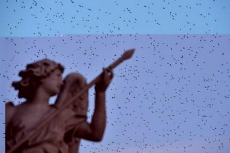 Скворцы, мигрируя из Северной Европы, пролетают через статую в Риме. Фото: Gabriel Bouys/AFP/Getty Images