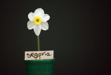 Садоводческое шоу открылось в Харрогите. Фото: Christopher Furlong/Getty Images