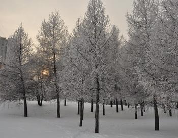 Февральский снег. Фото: Николай Богатырёв