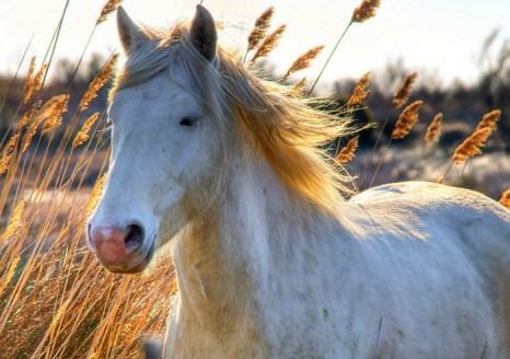 В Испании выпустили на волю лошадей редкой породы. Фото: Wolfgang Staudt/flickr.com
