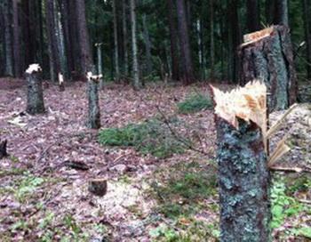 Детективная история об экологическом рейде в Кургальский заказник. Фото  с сайта greenfront.su