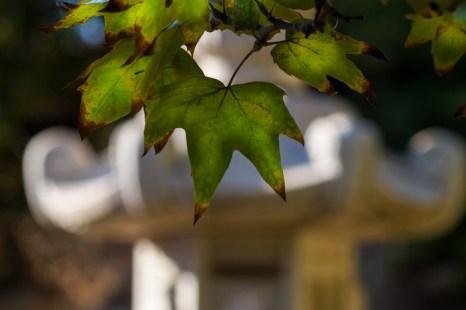 Осень, птицы, Японский уголок. Фото: Хава Тор/Великая Эпоха (The Epoch Times)