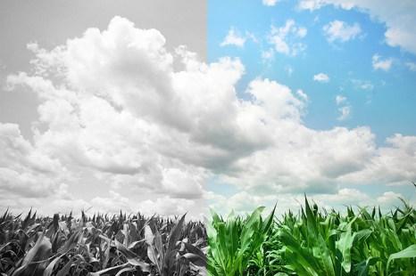Агро-гиганты, производящие ГМО, постоянно заявляют, что их продукция ничем не отличается от натуральной. Однако, разве эти отличия не существенны? Фото: Tim Boyle/Getty Images