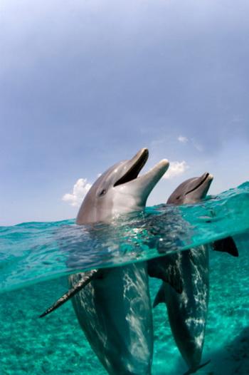 Кажется невероятным, но использовать эхолокацию люди могут, в общем-то, так же, как ею пользуются животные, вроде летучих мышей или дельфинов. Фото: Stephen Frink/Getty Images