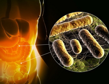 В организме взрослого человека количество микроорганизмов соотносится с количеством собственных клеток приблизительно как 50:12. Фото: 3D4Medical.com /Getty Images