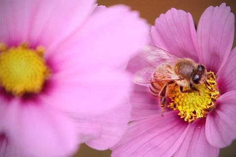Яд пчёл содержит множество биологически активных веществ, которые относятся к различным группам химических веществ. Фото: Dan Kitwood/Getty Images