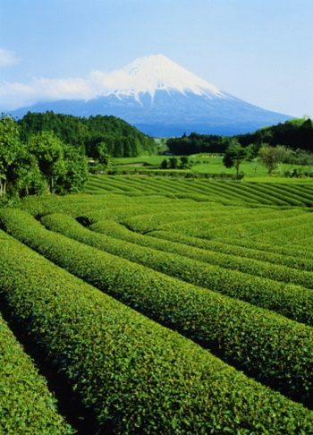 Зеленый чай такой полезный и вкусный напиток, к тому же лишен всех недостатков прививок! Фото: Chad Ehlers/Getty Images