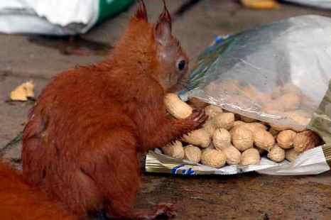 Орехи защищают от лишнего веса и от сердечных заболеваний. Фото: WOLFGANG KUMM/AFP/GettyImages