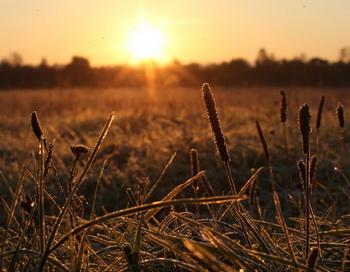 Осенний пейзаж. Фото РИА Новости