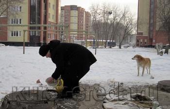 Елена Полянкина из Бердска кормит 13 бродячих собак  Фото с сайта http://www.kurer-sreda.ru/2012/01/11/57536
