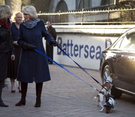 Камилла, герцогиня Корнуолльская, посетила приют для кошек и собак Bluebell в Лондоне.  Фоторепортаж. Фото: Adrian Dennis - WPA Pool/Getty Images