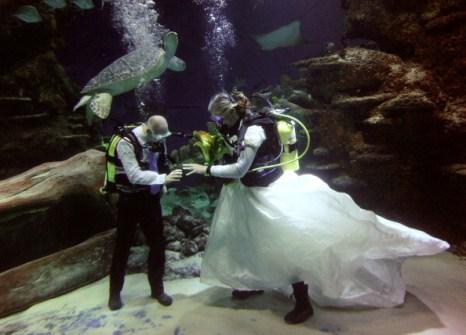 День святого Валентина отметили влюбленные всего мира. Лондонский аквариум, Англия. Фото: PETRAS MALUKAS/Getty Images