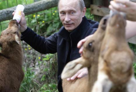 Владимир Путин в национальном парке «Лосиный остров». Фото: ALEXEY DRUZHININ/AFP/Getty Images