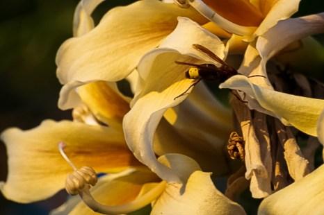 Чудо-дерево Хорисия. Фото: Хава Тор/Великая Эпоха (The Epoch Times)