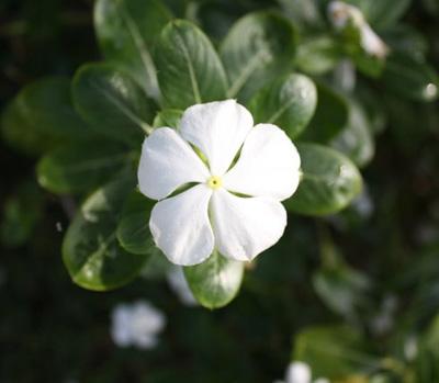 Цветы - природное совершенство. Фото: Екатерина Смирнова