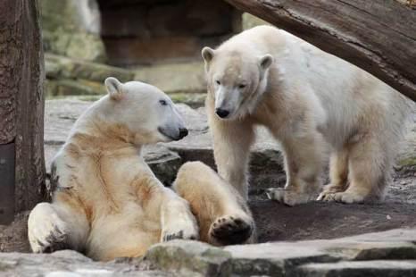 Медведь-лирик.Подозвал подругу. Фото:Getty Images